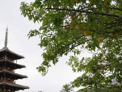 そうだ!奈良へ行こう♪ 奈良の魅力を再発見! 著名人も愛したクラシックホテルで優雅な休日を☆彡 前編