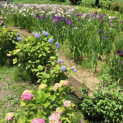 爽やかな初夏を楽しむ上尾丸山公園