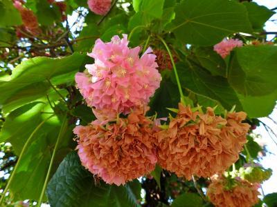 8日目:マデイラ植物園・色々な花々(ポルトガル):MSCマニフィカ号で行く:常春の楽園カナリア諸島とマデイラ島を巡るクルーズ15日間