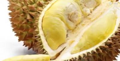 トロピカルフルーツドリアン カンボジアのドリアン