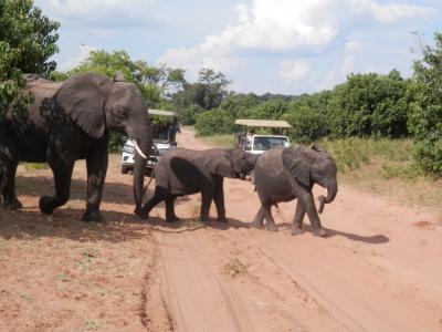 2017 南アフリカの旅6 動物王国チョベ国立公園を満喫