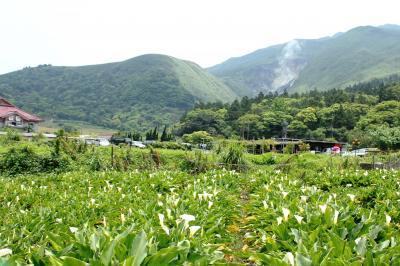陽明山へバイクで海芋を採りに行きました