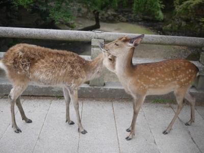 奈良~世界遺産めぐり