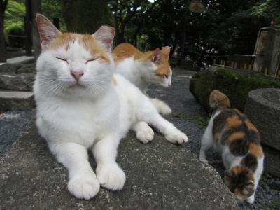 Day5 奈良・京都 最終日もやっぱり猫三昧そして大好きな道