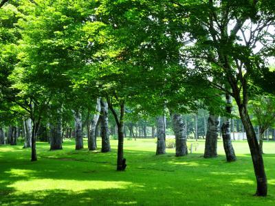 帯広~旭川 旅行  帯広駅周辺,十勝ヒルズ,富良野, 美瑛など・・・暑かった。