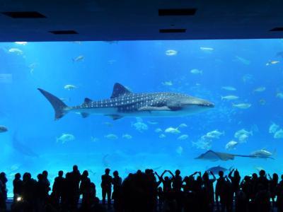 JALパック「沖縄をあそぼう」で行く3度目の家族沖縄旅行は家族が増えて更に3世代旅行となりました。その4