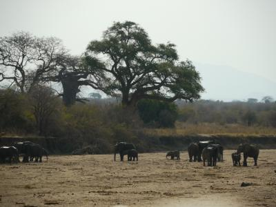 西タンザニア旅行記 2