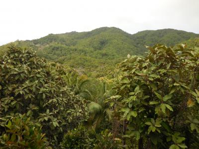 椰子の島へ~(後編)ココドメール、ハプニングを乗り越え帰国~