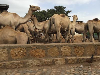 サハラ以南アフリカ2カ国(エチオピア)