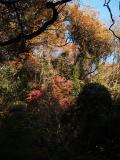 鎌倉番場ヶ谷(ばんばがやつ)-2010年師走