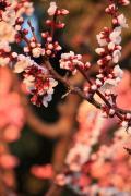 服部緑地公園で梅の花を見たにゃん