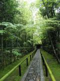 しとしと小雨の京都