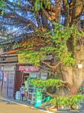 谷根千お散歩マップ 東京下町を歩く 谷中 根津 千駄木 日暮里    レトロな町なみ散策30