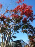 富弘美術館と紅葉