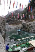Solitary Journey [1344] 吉野川の景勝地・大歩危渓谷を元気いっぱいに泳ぐ鯉のぼり<春うらら~♪四国四県・車旅>徳島県三好市