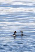 野鳥撮影記録(2016年2月ーその7) 海と山