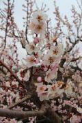 2016年3月 水戸の偕楽園で梅まつり&この時期の茨城グルメのあんこう鍋を満喫