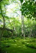 京都☆嵯峨野トロッコ列車~祇王寺