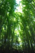 京都☆竹林の道~天龍寺~渡月橋~龍安寺