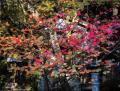 駆けぬける 季節  秋 ~ 冬 へ