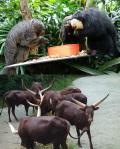 愉快な愛おしい奴らがいっぱい♪ シンガポール動物園 & ナイトサファリ 2016