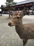 ムスメと一緒に京都奈良旅行2016年2月 ②とことんスイーツ