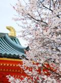 ひとりお花見部2009 禅居庵夜桜コンサートなど 初めてのデジイチでほとんど失敗