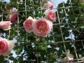 妹の誕生日に母が撮ったPhoto「花」のプレゼント♪〜蒜山と福山〜