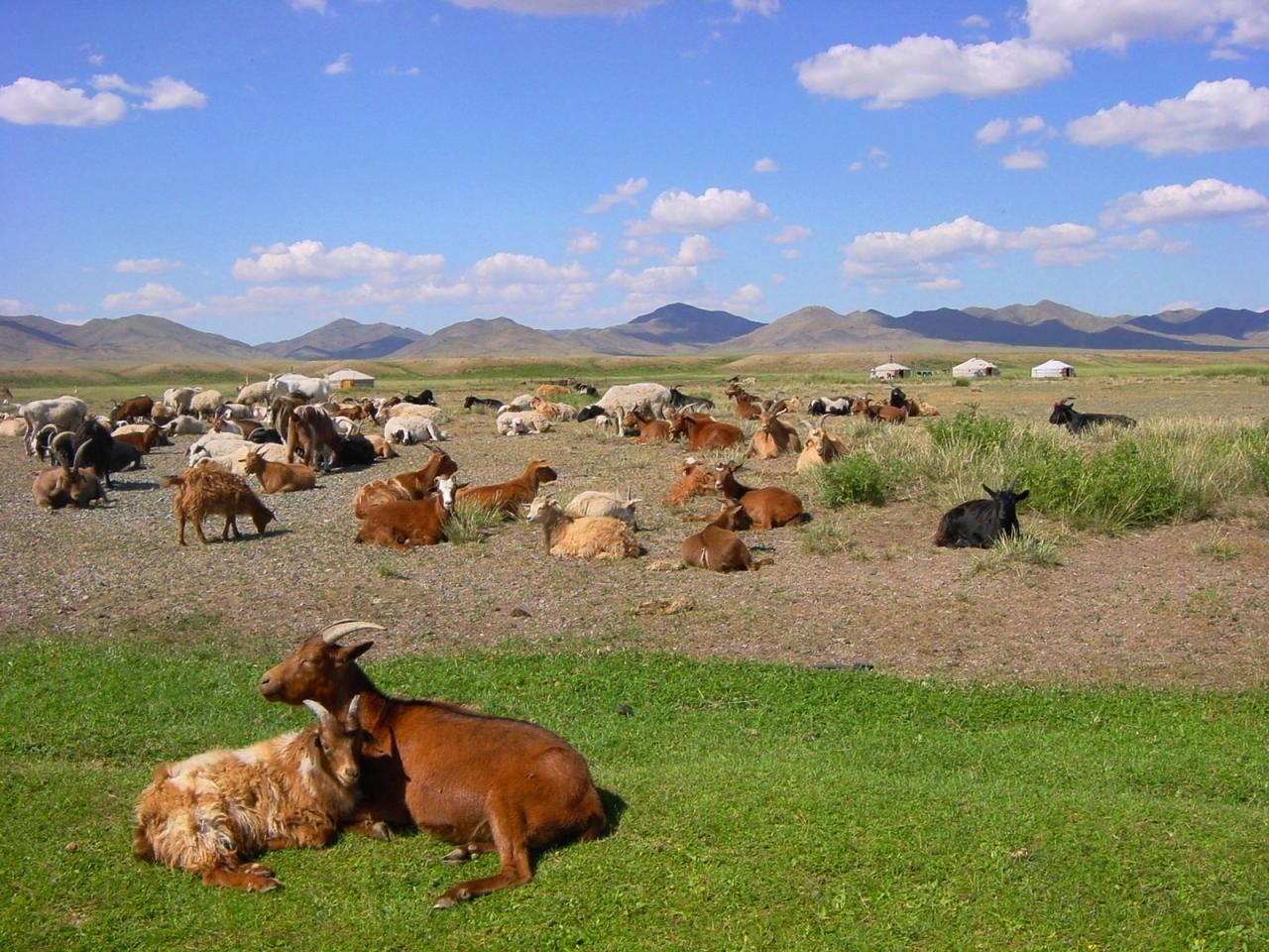親子3代、モンゴルの蒼き野原を馬で駆け...