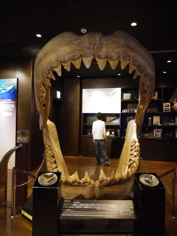 沖縄美ら海水族館で、ヴォルデモートと顔文字に出会いました。