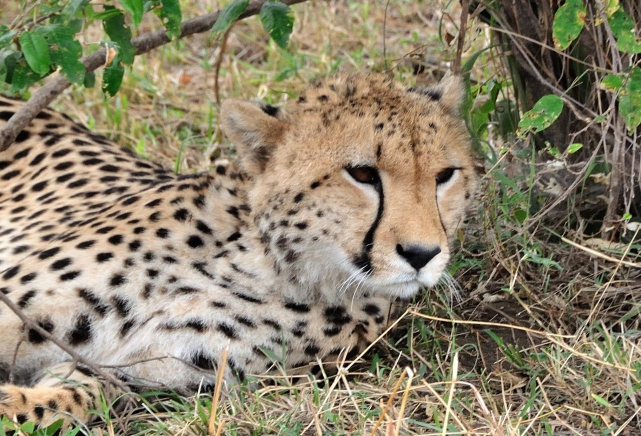 ケニアサファリ 5 生き残るための営み