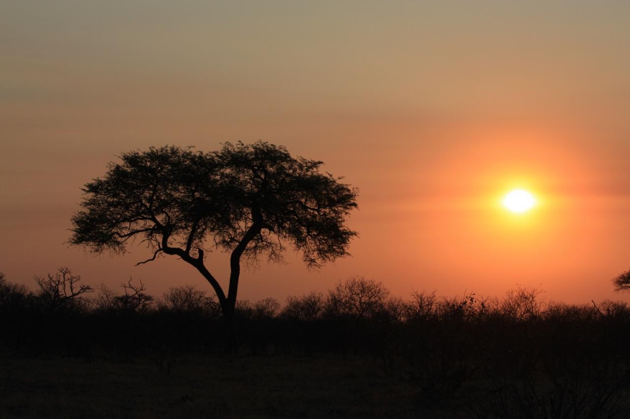 ボツワナ&ナミビアの旅(5)チョベ・SUVUTI...