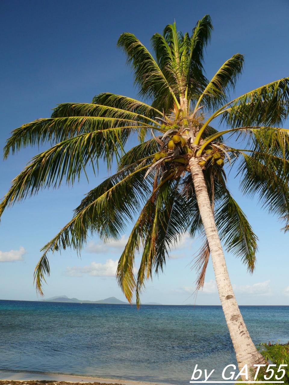 太平洋の島々へ行こう〜ミクロネシア連邦...