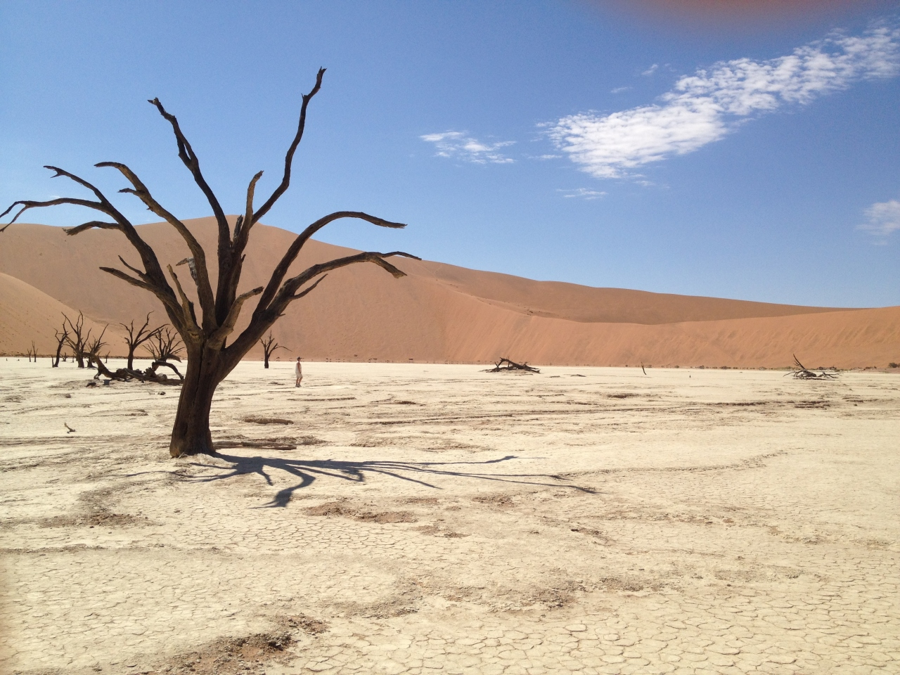 ナミブ砂漠の画像 p1_28