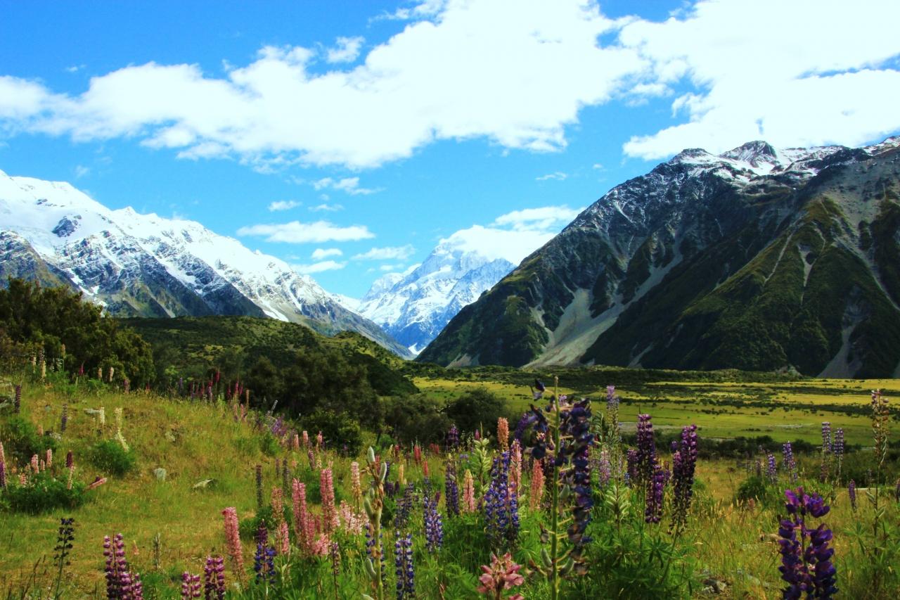 大自然を満喫!ニュージーランドの旅=後...