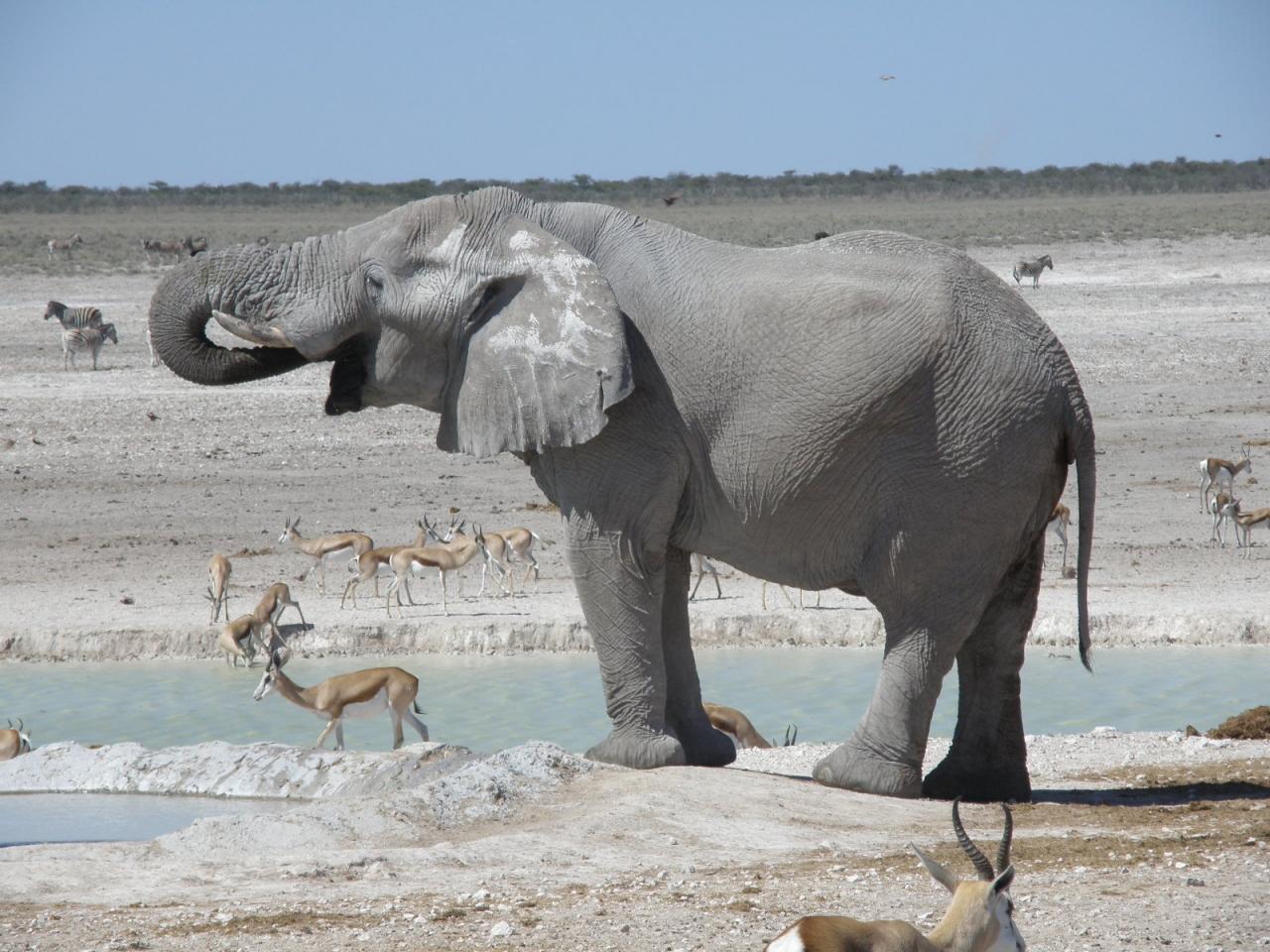 2013.GW ナミビア旅行記7  エトーシャ...