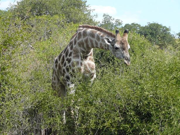 アフリカ南部紀行2009(チョベ国立公園編)�