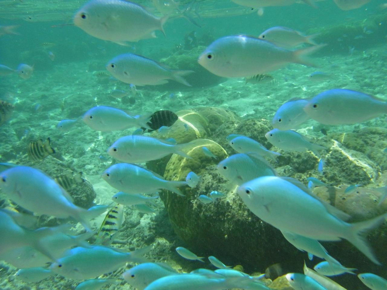 グアムで魚になる�