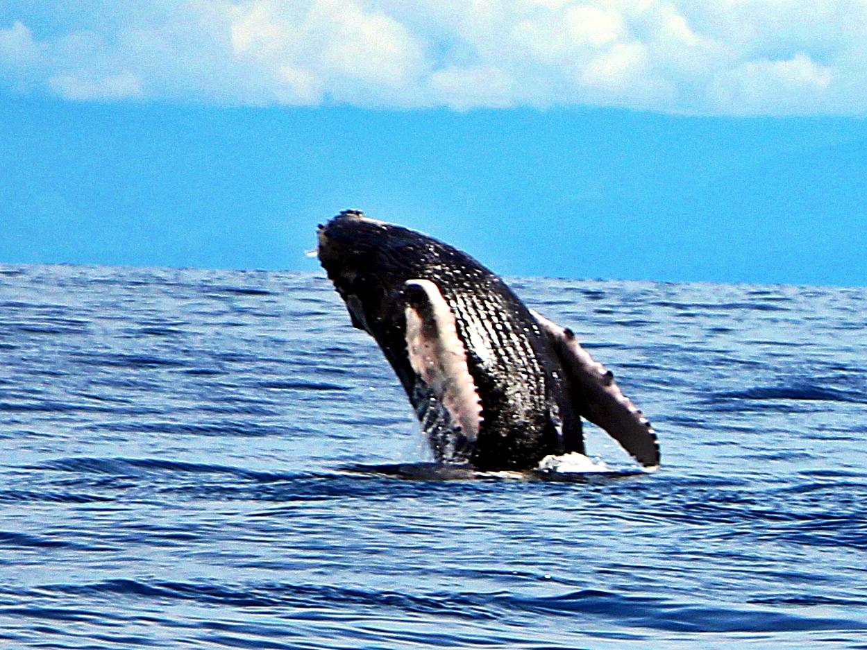 鯨が舞う海☆親子クジラが Dance・ダンス・...