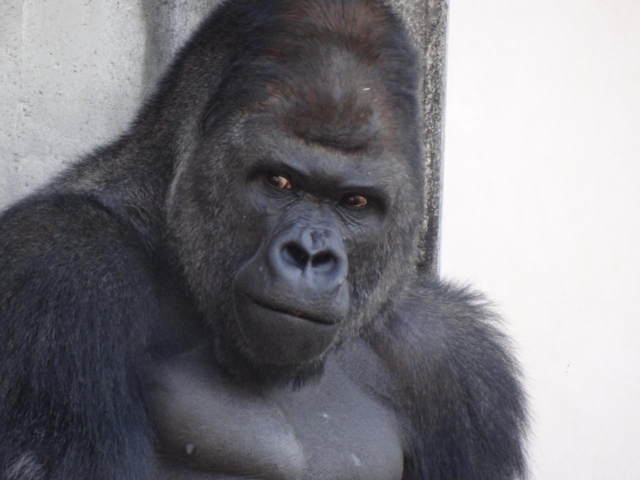 『おばさんも、たまには動物園』 [愛知]のブログ・旅行記 by kumi ...