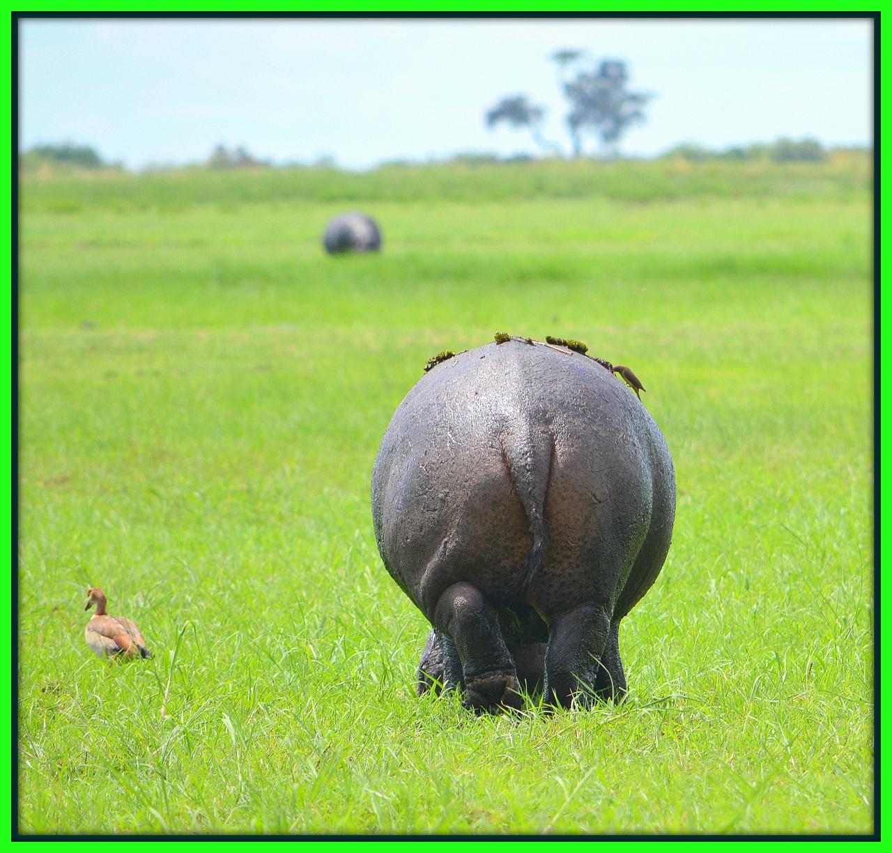 普通の旅に飽きたら....やっぱ、アフリカ ...