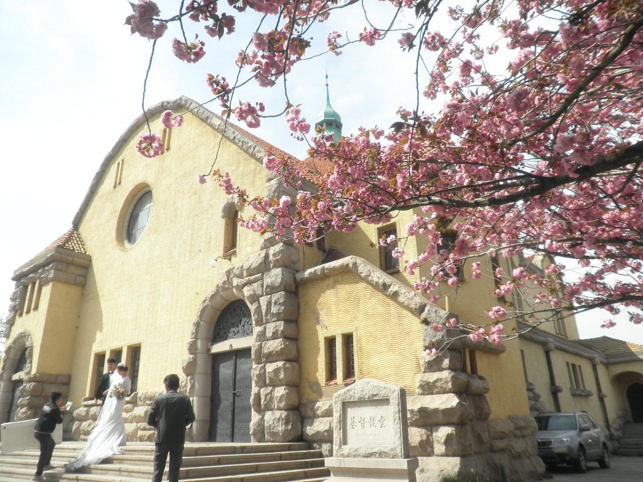 桜前線2017・青島(教会の八重桜)
