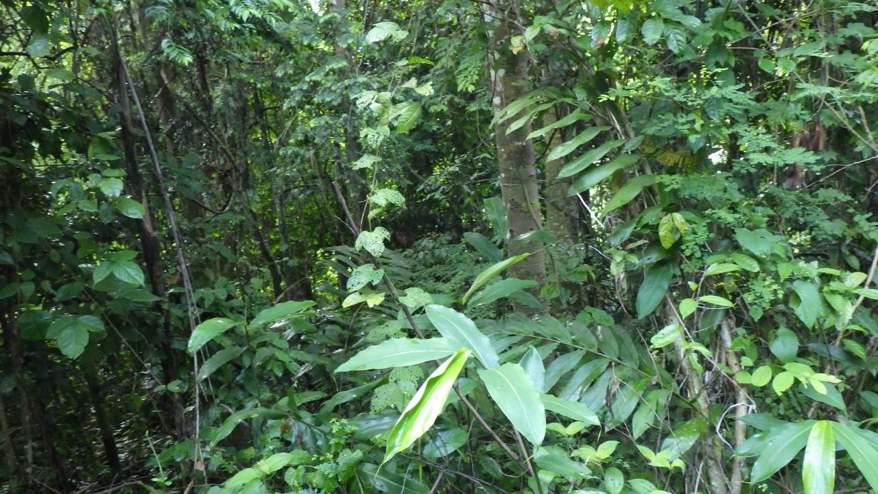自然満喫のマレーシア  2.タマンネガラ...