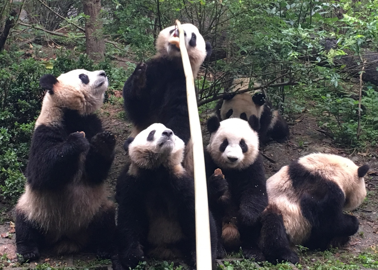 中国四川省〜世界遺産、三国志、熊猫、麻...
