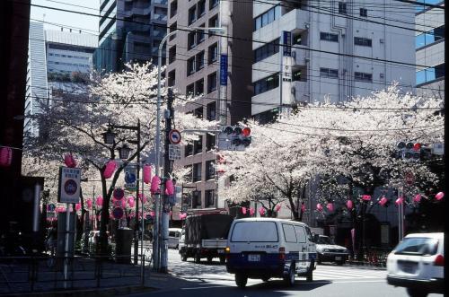 中野探訪 春編