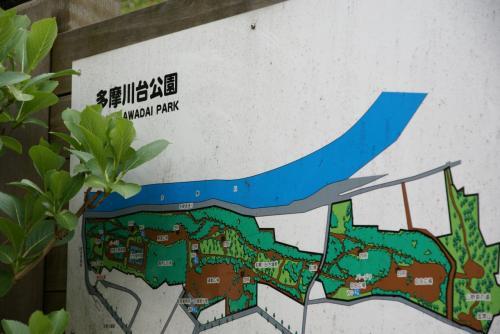 多摩川台公園で散りはじめの観桜