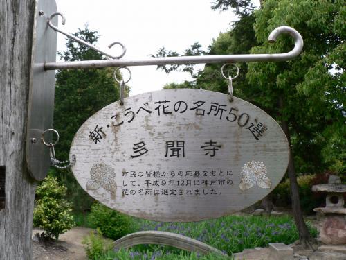 多聞寺のカキツバタ