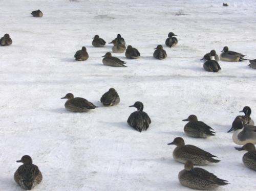 鶯宿温泉・盛岡・・雪にも負けず・・。