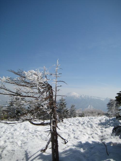 安比高原、春スキー