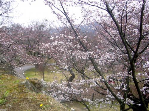 小諸・戸倉上山田温泉・あんずの里・・お墓参りとお花見。
